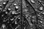 Divided Droplets by JustinDeRosa
