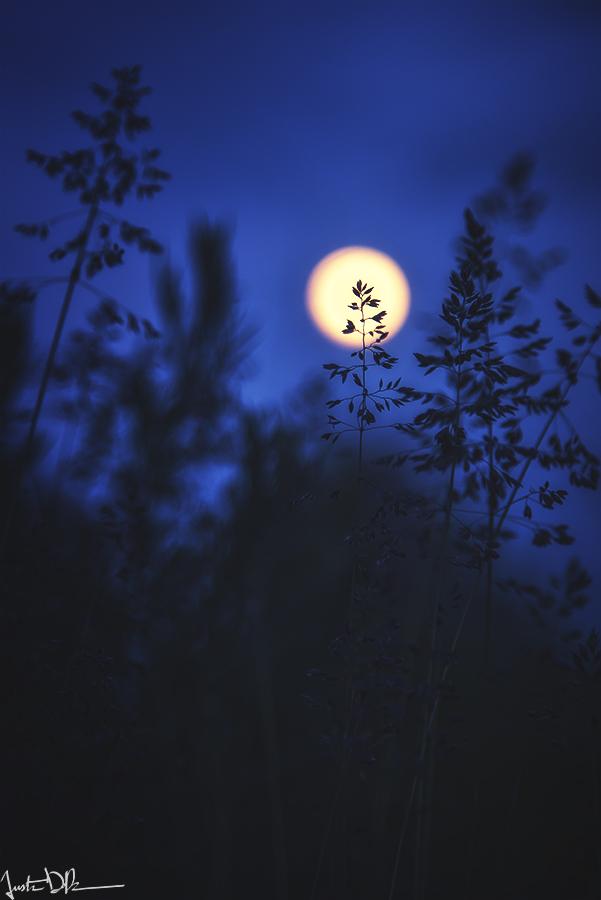 Moon Tales by JustinDeRosa