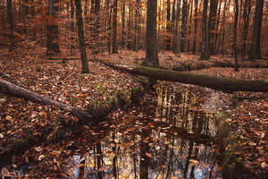 of leaves and mirrors by JustinDeRosa