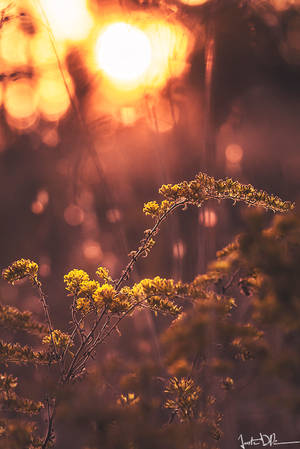 Glowing by JustinDeRosa