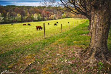 On the farm by JustinDeRosa