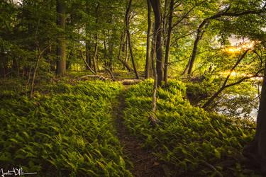 Among Ferns by JustinDeRosa
