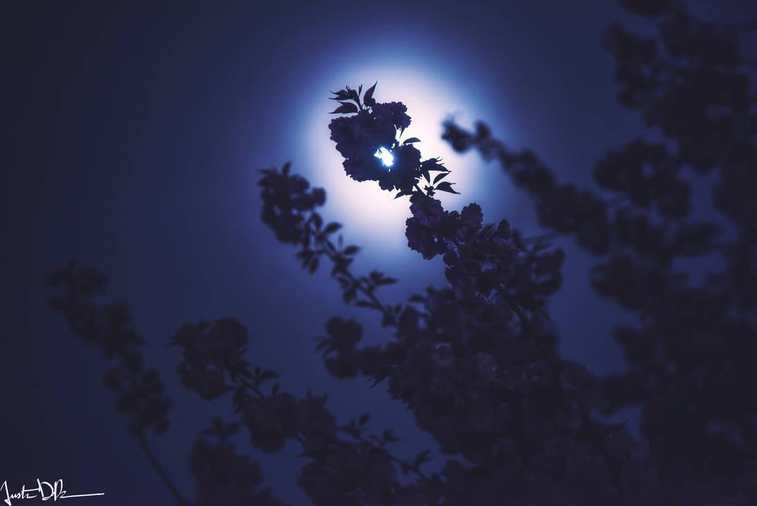 Moon gazing by JustinDeRosa