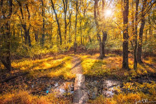 The Forgotten Woods