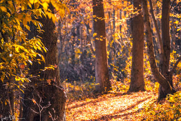 Into the golden forest I
