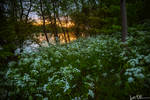 Sunset through the wildflowers
