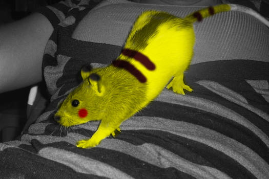 Heriome the pika rat