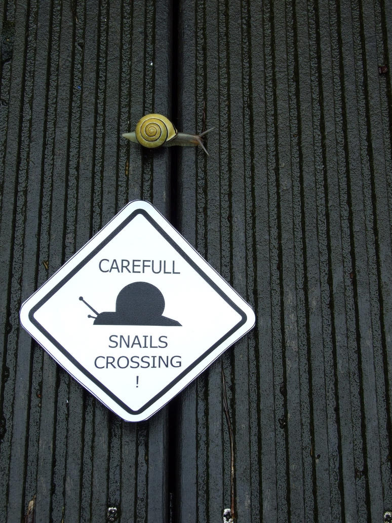 snails crossing by violanigra