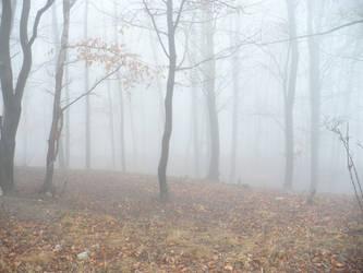 Spooky forest by Akai-Hiya