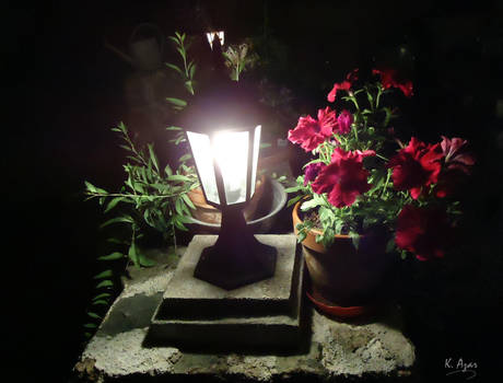 Night and flowers.
