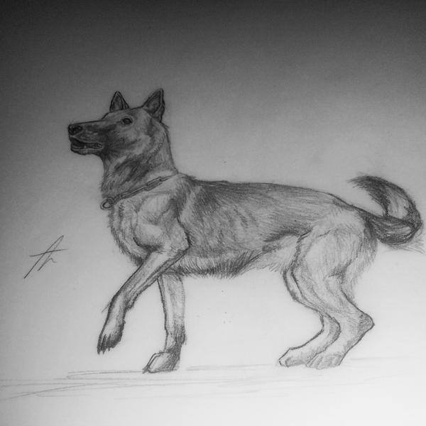 German Shepherd dog - traditional drawing by Pencil--Pony ...