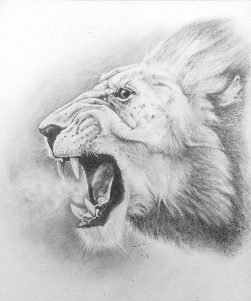 Roaring Lion - traditional by Pencil--Pony on DeviantArt
