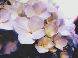 Flowers 1 by kingoffreedom