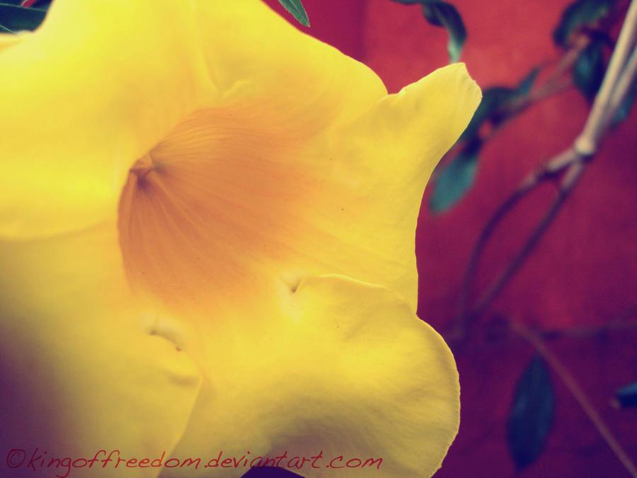 flower 15 by kingoffreedom