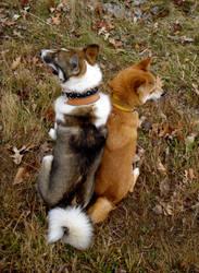 Dog Backs