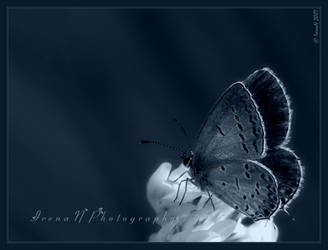 Gossamer Winged by Irena-N-Photography