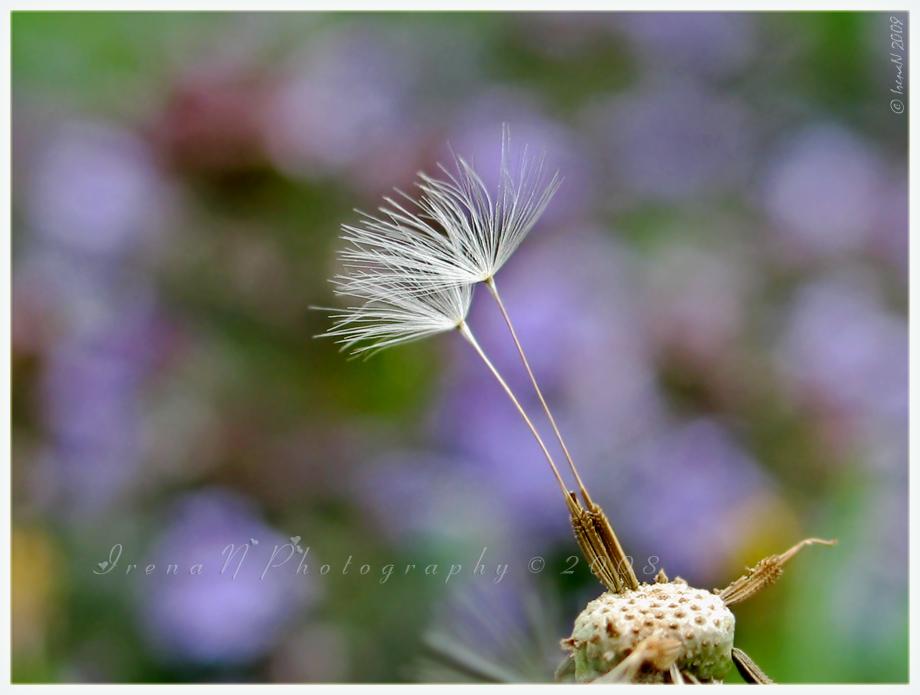 Windblown by WaitingForTheWorms