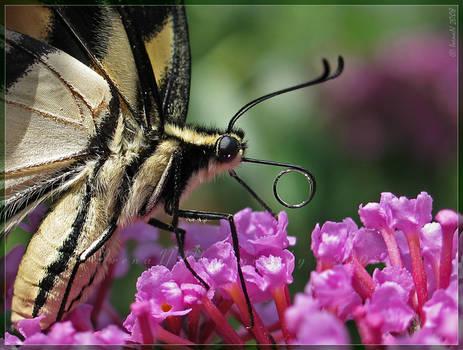 'Where is my nectar?'