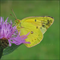 Bright Yellow by Irena-N-Photography