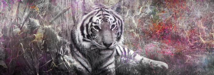 Tiger by imlissy