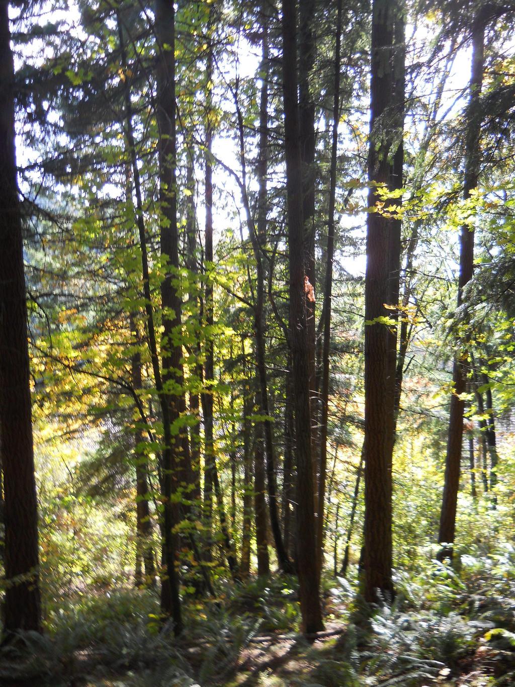 Mount Talbert Nature Park Trail Map