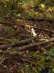 Nature stock 4 by lavitzstrife