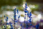 .:BlueandBokeh:. by Loviisaaa