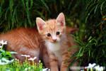 Kitten And Flower 1.2