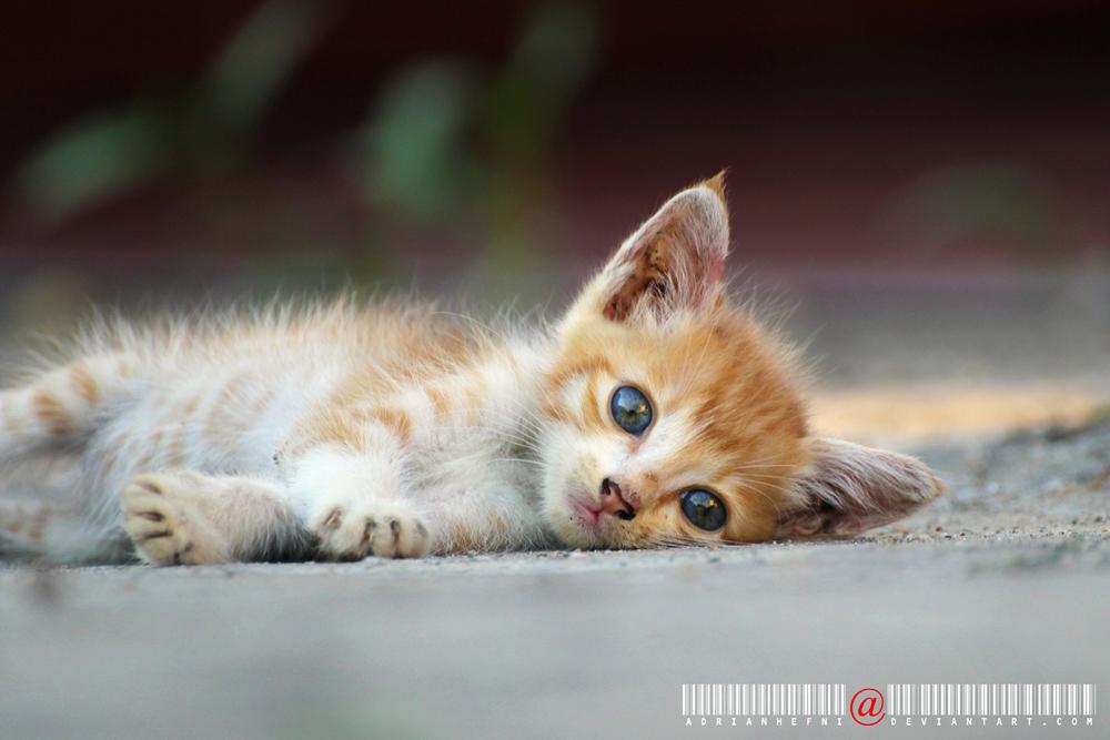 Sleepy Kitty 2 by adrianhefni