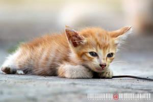 Sleepy Kitty 2.1 by adrianhefni