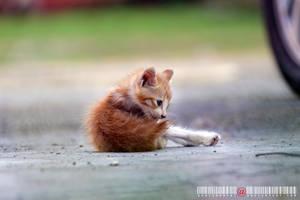 Little Kitty by adrianhefni