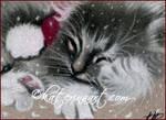 Santa kitty ACEO Christmas giveaway