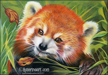 Red Panda by Katerina-Art