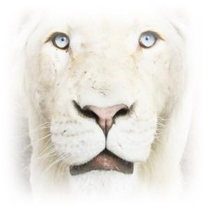InkosiLion's Profile Picture