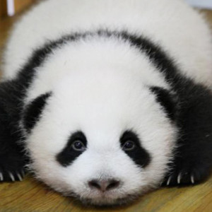 Fuffly-Panda's Profile Picture