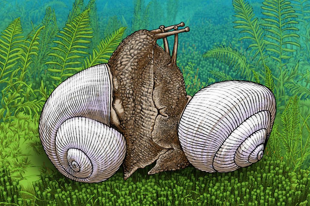 Snails 2 by ziorker