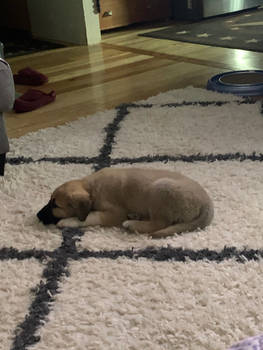 My new puppy Ares