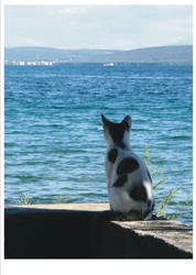 holidays'05 - cat, the dreamer