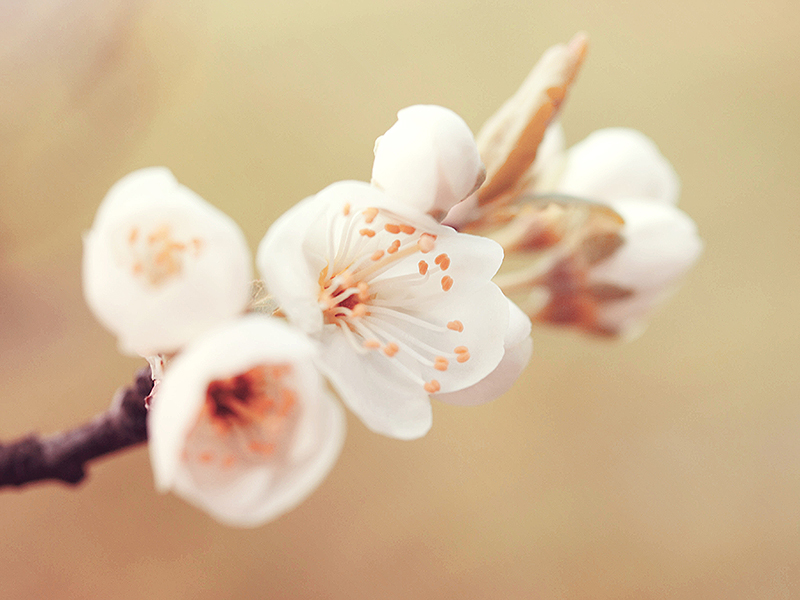 Vintage Spring by Sharon77Speeds
