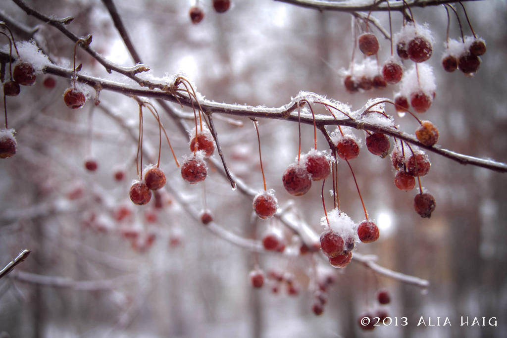 Frozen Berries by aruluna