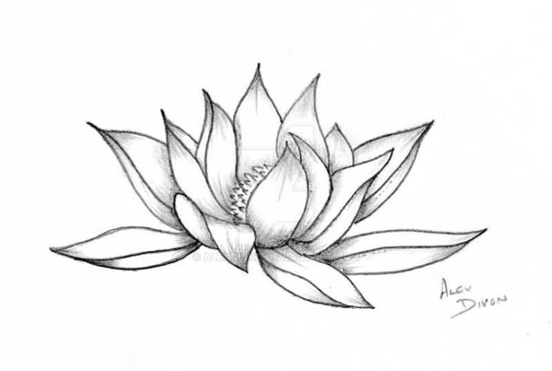 Lotus flower by alexdicko on deviantart lotus flower by alexdicko mightylinksfo