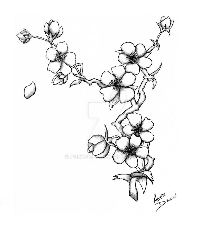 Blossom Flower Line Drawing : Cherry blossom by alexdicko on deviantart