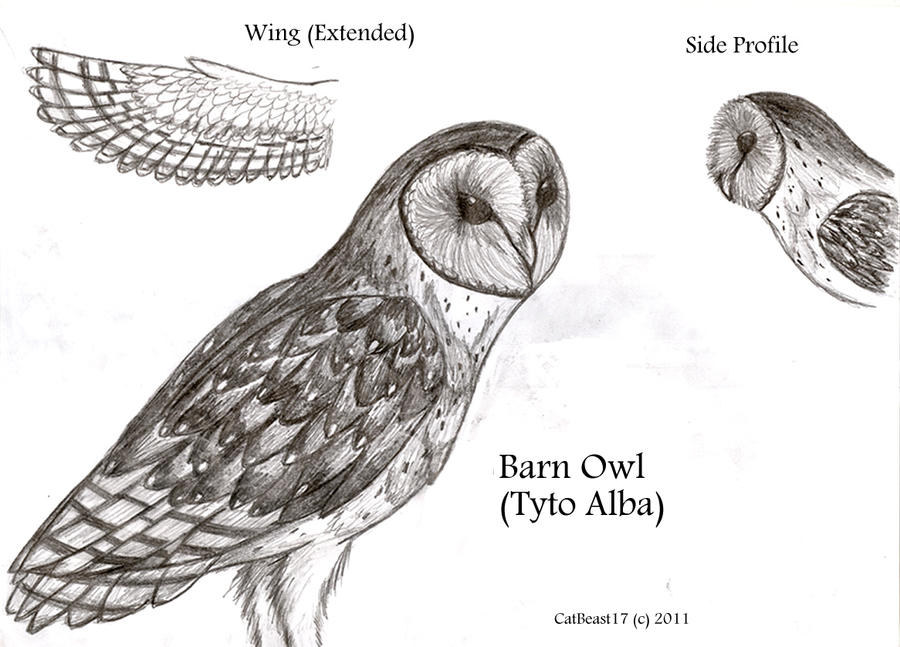 The anatomy of an owl | Coursework Academic Service xotermpapergpfz ...