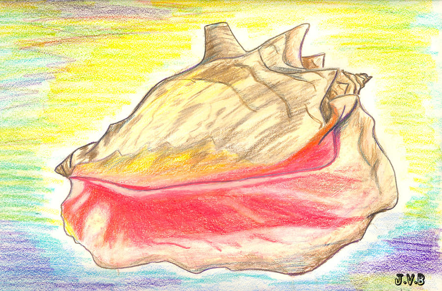Conch Shell By Catbeast17 On Deviantart