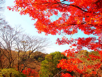 autumn by yukino-k