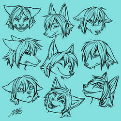 Blacktail fox - emotions