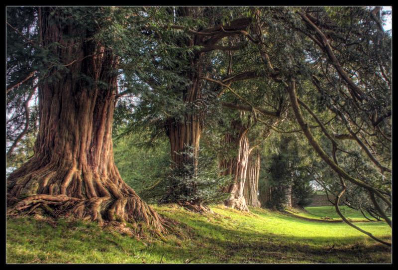 Under The Yew Tree by ciar4n