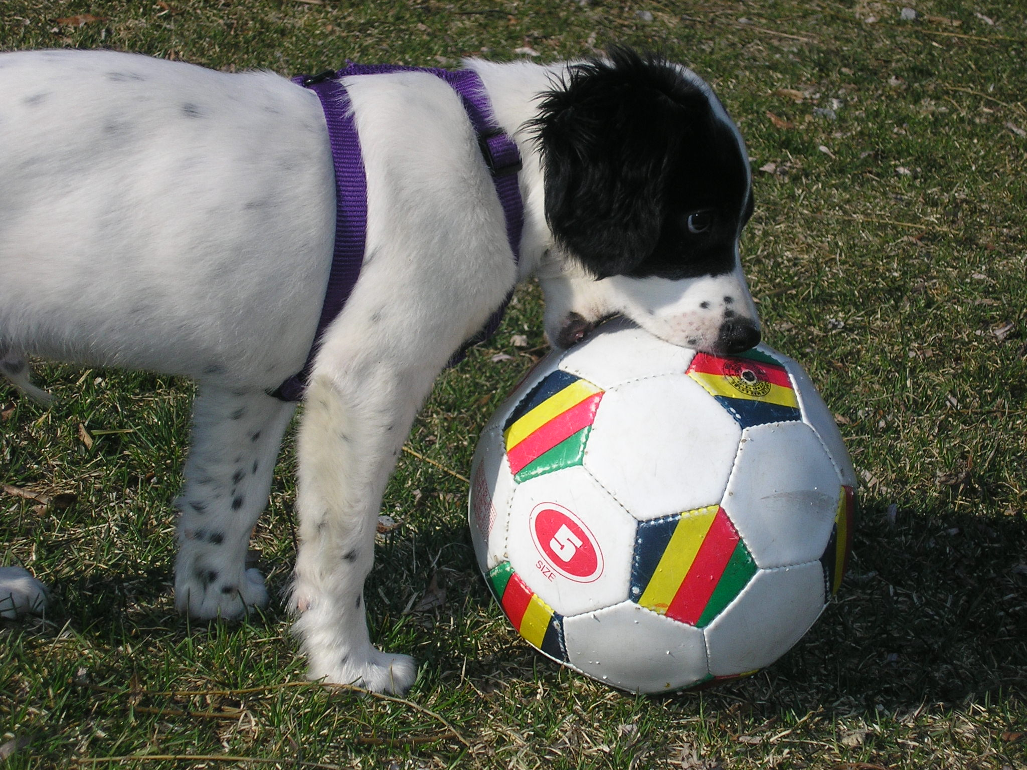 Soccer Pup by MajesticPegasus