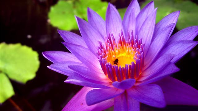 A Pretty Flower By Playfielder On Deviantart