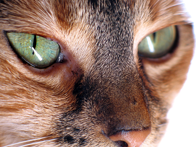 Eye of the Cat by playfielder